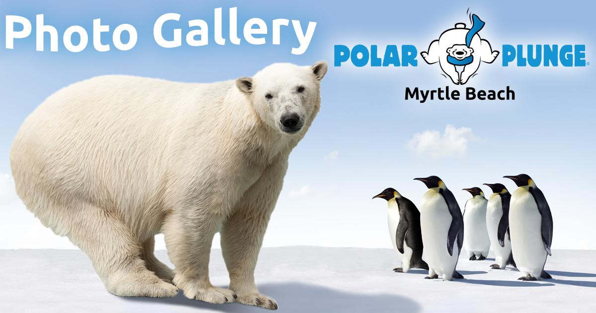 Myrtle Beach Polar Plunge -Photo Gallery